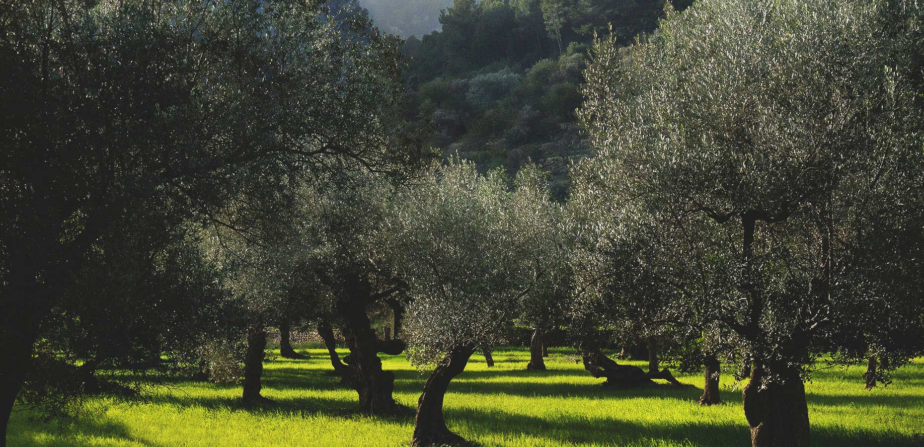 Image of Valldemossa Moorish town with orchards of olives and lemons